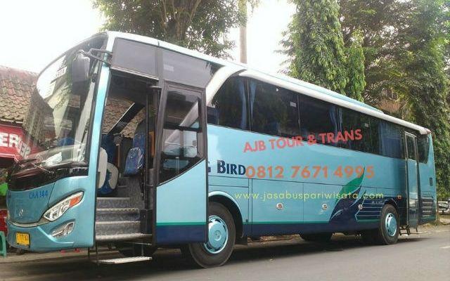 sewa-bus-pariwisata-big-bird